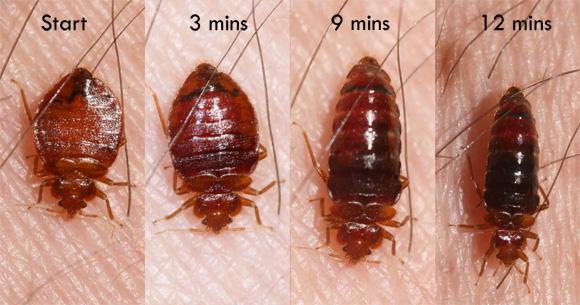 Ny Victoria S Secret Bed Bugs