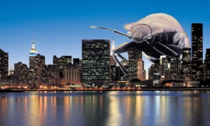 bedbugs-new-york--006